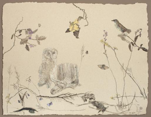 Scrub Wren and Owl