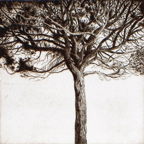 Williamstown Tree